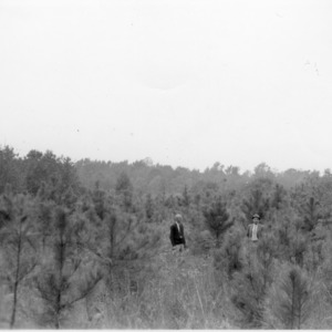 A. A. Battle and J. C. Powell examining loblolly pines