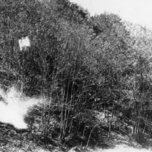 Black locust trees reclaiming eroded land