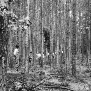 Farmers counting standing timber