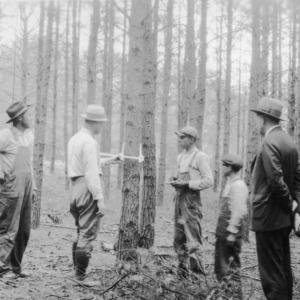 Forestry club study of timber
