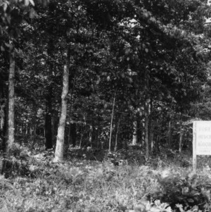 Sign notifying forest management demonstration in front of trees