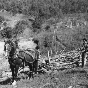 Man and horse using snaking sled