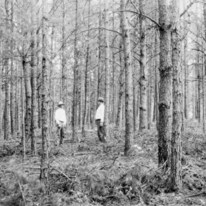 Ralph Hartley's forestry demonstration