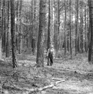 Ralph Gray's timber thinning project with little brother