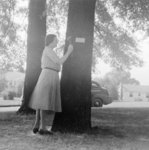 Mrs. Charles B. Wagoner placing name plate on tree