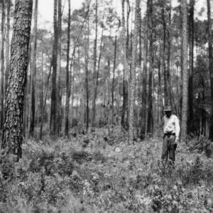 Men indicating stumps left after timber harvest