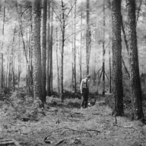 Man examining timber stand after harvest