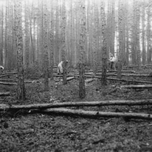 Men cutting timber in forest