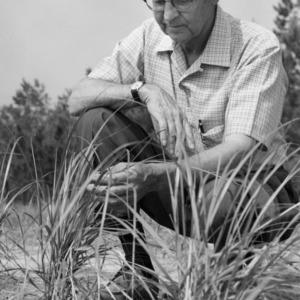 Dr. W. W. Woodhouse examining beachgrass