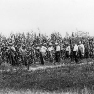 Men examining corn field