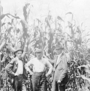 Men standing in corn field