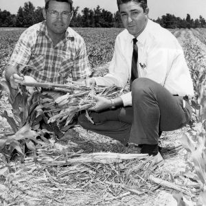 Corn farmer Lethel Britt with Extension Agent Frank Baker in corn field