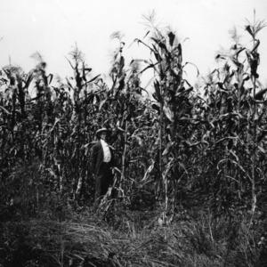 Man standing in corn field