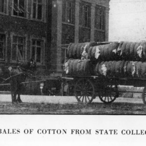 Eighteen bales of cotton from North Carolina State College Farm