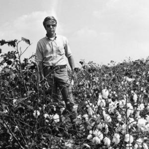Man in cotton field