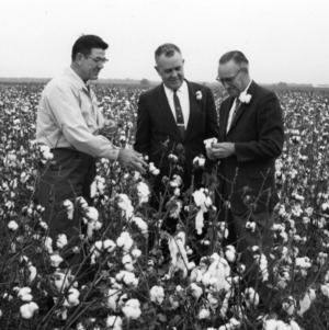 Glenn Toomey, Mr. Heidelberg, and Emerson Collins in cotton field