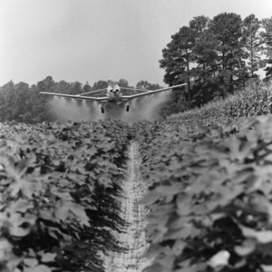 Plane aerial spraying cotton for boll weevils