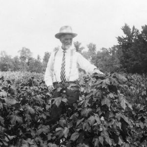 Farmer with cotton crop after rotation with peanuts
