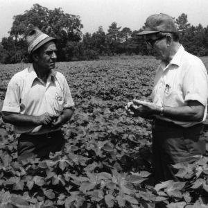 Farmer A. G. Cooper and specialist Glenn Toomey in cotton field