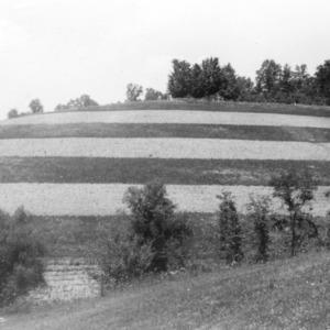 Strip-cropping on farm