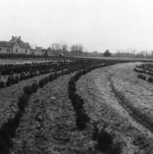 Terraces on Howard-Hickory Nursery Farms