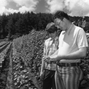 Two men examining field crops
