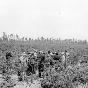 Conference attendees inspecting field on H. G. Huntington's blueberry farm