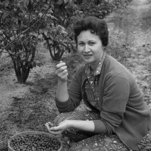 Blueberry grower Mrs. Cooper
