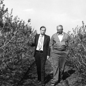 Men walking through field