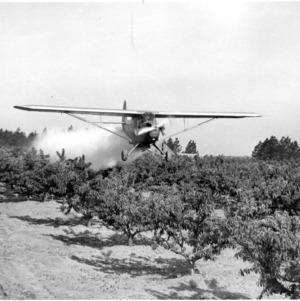 Plane dusting fruit orchard