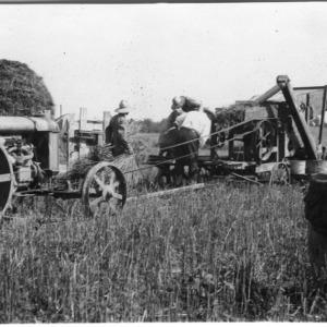 Threshing wheat