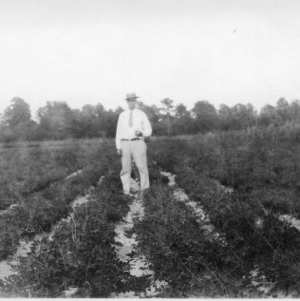 Man in peanut field