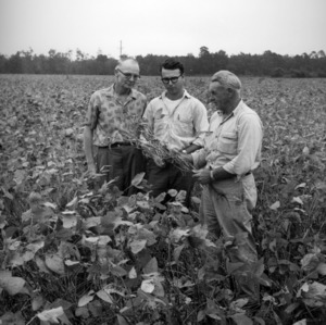 L. A. Powell, Newton Hampton, and Lindsey Hampton in soybean field