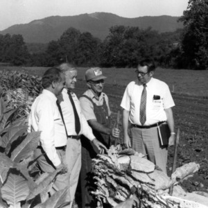 Men in tobacco field