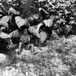 Boy sitting in tobacco field