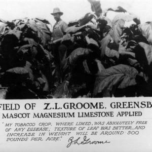 Tobacco field of A. L. Groome, Greensboro, N.C.