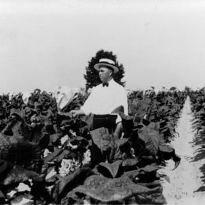 Man in tobacco field