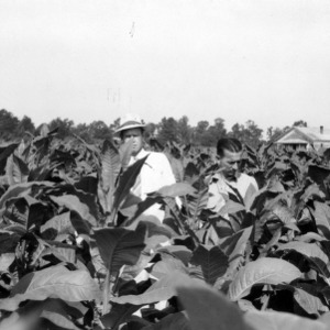 Ross Vaughn and agent Hallawell looking at tobacco growing demonstration