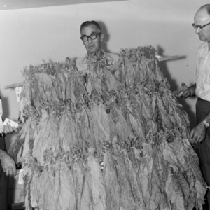 Three men with dried tobacco at Border Belt Tobacco Research Station