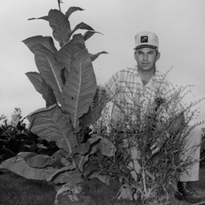 Man with tobacco plant