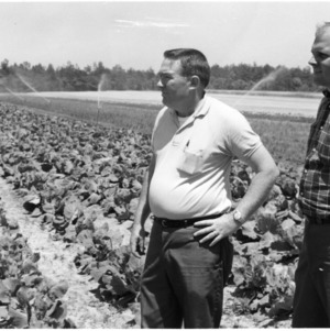 Roy Reese and George Hughes in irrigated vegetable field