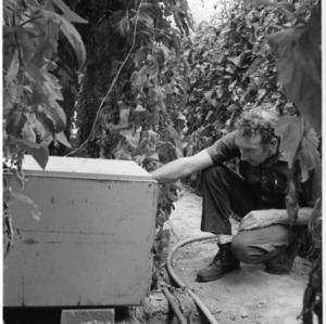 Man examining equipment in greenhouse