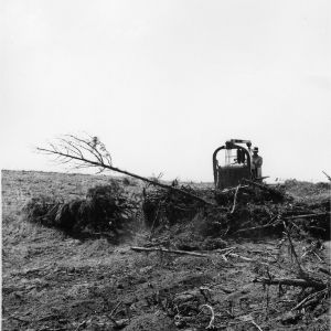 Farmer Bulldozing Ground for Pasture