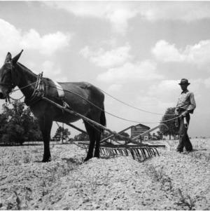 Cultivating Corn Field