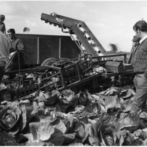 Cabbage Mechanical Harvester