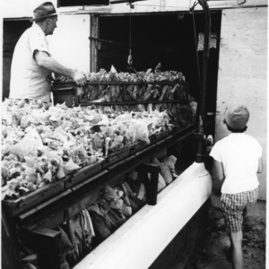 Men moving a frame of tobacco from loading racks to curing barn