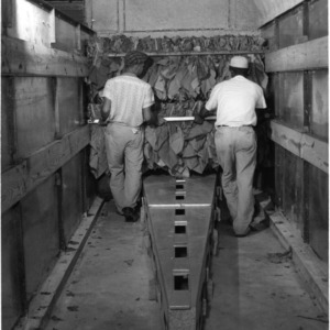 Tobacco workers placing bulk curing racks in two-tiered barn