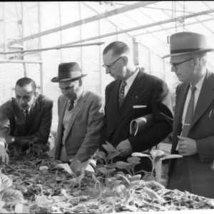 Four men discussing plants in a greenhouse, Farm Press and Radio Institute