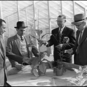 Four men discussing plant in a greenhouse, Farm Press and Radio Institute