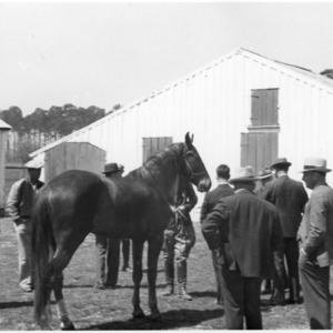 Group of men with horse, farm tour, Bell's Island
